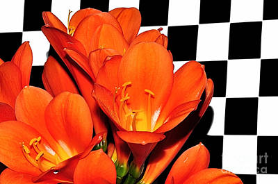 Clivia Flowers Photograph - Colorful Clivias On Black And White Checks by Kaye Menner