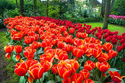 Crazing Photograph - Colorful Corner Of The Keukenhof Garden 2. Tulips Display. Netherlands by Jenny Rainbow