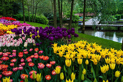 Photograph - Colorful Corner Of The Keukenhof Garden. Tulips Display. Netherlands by Jenny Rainbow