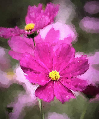 Photograph - Colorful Cosmos by HH Photography of Florida