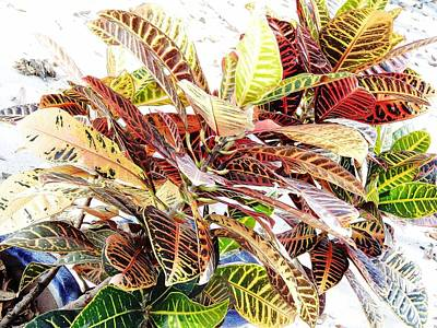 Photograph - Colorful - Croton - Plant by D Hackett