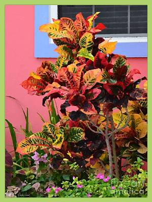 Photograph - Colorful Croton by Darla Wood