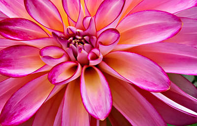Photograph - Colorful Dahlia by Mary Jo Allen