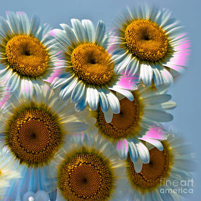 Photograph - Colorful Daisies - Duvet Cover Sized by Scott Hervieux