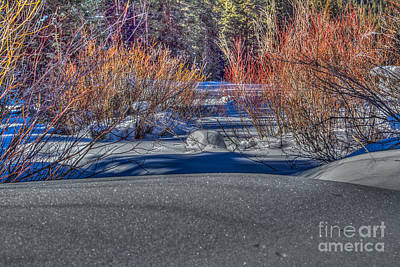 Photograph - Colorful Despite Snow by Franz Zarda