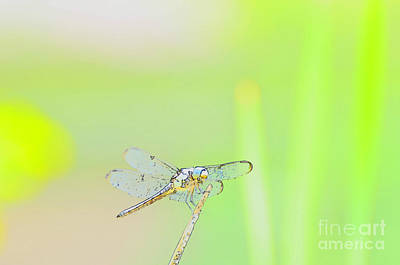 Photograph - Colorful Dragonfly by Donna Brown