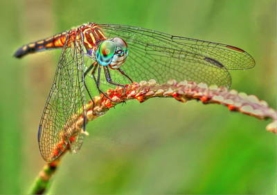 Colorful Dragonfly Art Print by Myrna Bradshaw