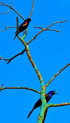 Photograph - Colorful Duet by Zafer Gurel