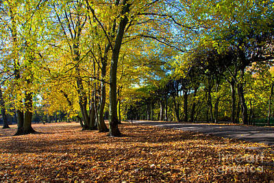 Charming Photograph - Colorful Fall Autumn Park by Michal Bednarek