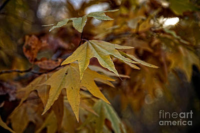Photograph - Colorful Fall Foliage In The Verde Canyon Arizona by Ron Chilston