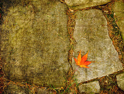 Photograph - Colorful Fall Leaf On Stone by Marianne Campolongo