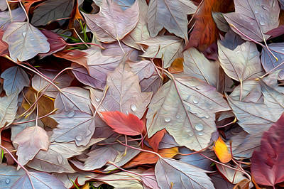 Photograph - Colorful Fall Leaves 1 by Judith Barath