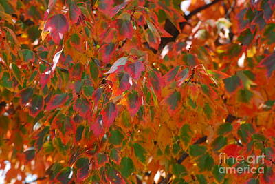 Photograph - Colorful Fall Leaves by Mark McReynolds