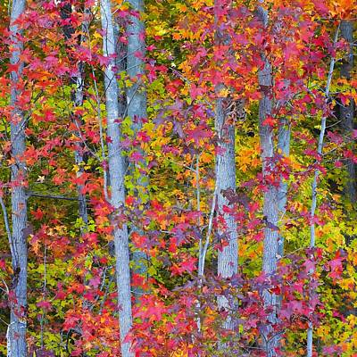 Colorful Fall Leaves Art Print by Scott Cameron