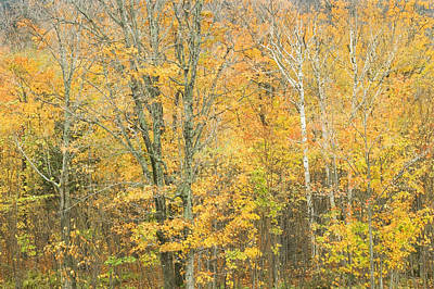 Maine Landscape Photograph - Colorful Fall Trees In Maine by Keith Webber Jr