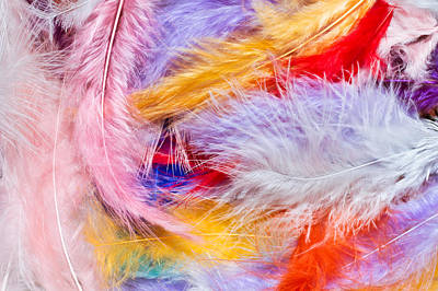 Colorful Feathers Art Print by Tom Gowanlock