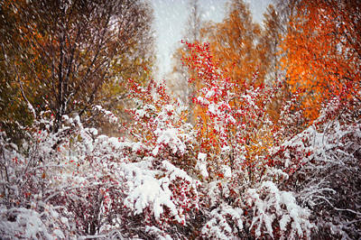 Photograph - Colorful Fireworks At Late Autumn by Jenny Rainbow