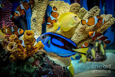Photograph - Colorful Fish by Cheryl Baxter