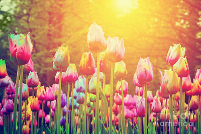 Ornamental Photograph - Colorful Flowers Tulips In A Park Sun Shining by Michal Bednarek