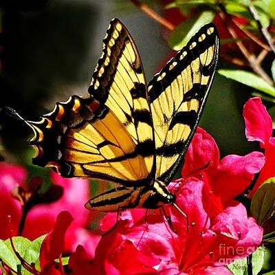 Colorful Flying Garden Art Print by Nava Thompson
