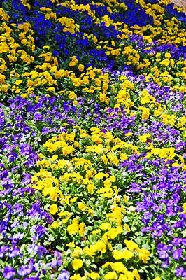 Photograph - Colorful Garden by Aimee L Maher Photography and Art Visit ALMGallerydotcom