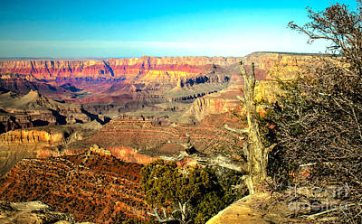 Photograph - Colorful Grand Canyon by Robert Bales