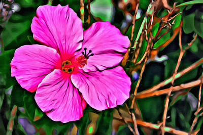 Photograph - Colorful Hibiscus by Alice Gipson