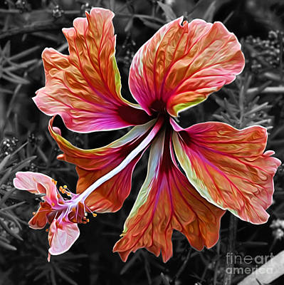 Stamen Digital Art - Colorful Hibiscus On Black And White 2 by Kaye Menner