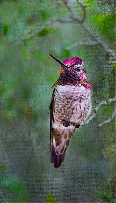 Photograph - Colorful Hummer by Barbara Manis
