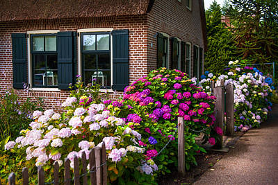 Photograph - Colorful Hydrangeas. Giethoorn. Netherlands by Jenny Rainbow