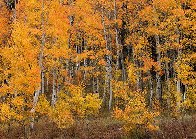 Photograph - Colorful Idaho Forest by Leland D Howard