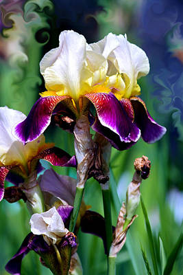 Calypso Photograph - Colorful Iris Grandeur by Karon Melillo DeVega