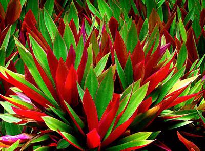 Digital Art - Colorful  by Kara  Stewart