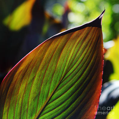 Photograph - Colorful Leaf by Nicholas Burningham