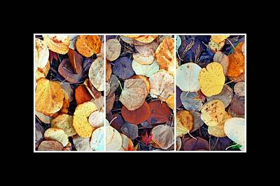 Photograph - Colorful Leaves Triptych by Patricia Strand