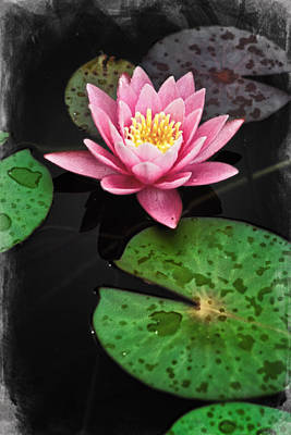 Digital Art - Colorful Lily Pads 1 by Patrick M Lynch