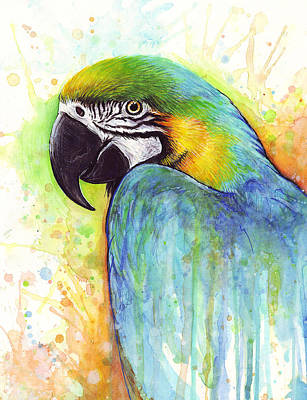Bird Watercolor Painting - Macaw Painting by Olga Shvartsur