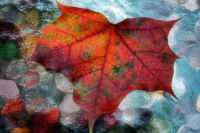 Photograph - Colorful Maple 2013 by Beth Akerman