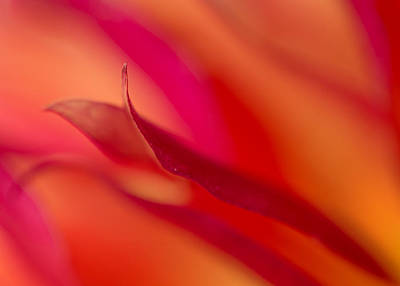 Abstract Movement Photograph - Colorful Motion by Mary Jo Allen