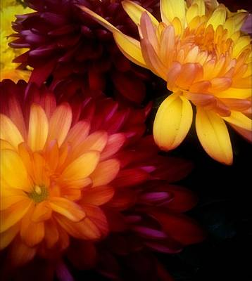 Photograph - Colorful Mums by Michelle Frizzell-Thompson