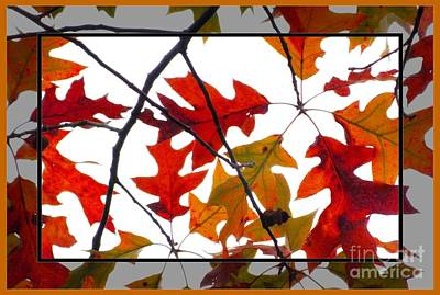 Leaves Photograph - Colorful Oak Leaves by Scott Cameron
