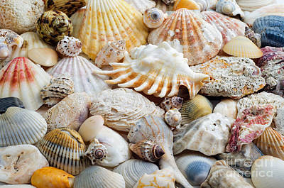 Photograph - Colorful Ocean Seashells 1 by Andee Design
