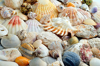 Photograph - Colorful Ocean Seashells 2 by Andee Design