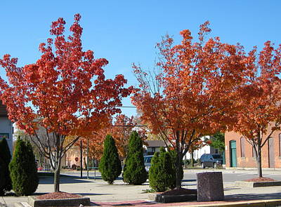 Photograph - Colorful Ohio Trees by Denise Mazzocco