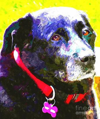 Labrador Digital Art - Colorful Old Dog by Barbara Griffin