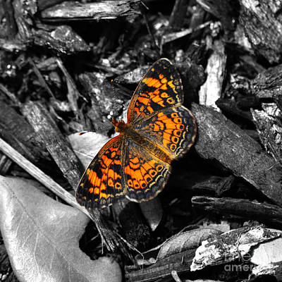 Colorful Orange Spotted Butterfly Macro Square Format Color Splash Digital Art Art Print by Shawn O'Brien