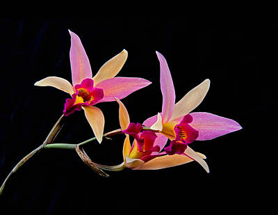 Photograph - Colorful Orchid by Gary Slawsky