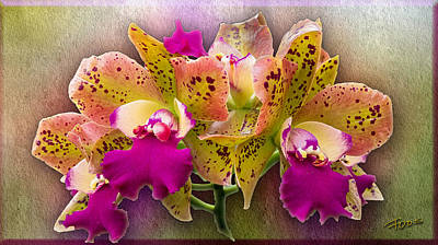Photograph - Colorful Orchid by Roy Foos