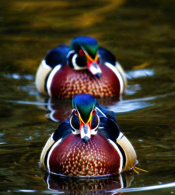 Photograph - Colorful Pair by Steve McKinzie