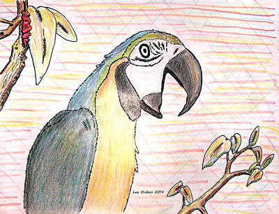 Drawing - Colorful Parrot by John Orsbun